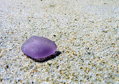 Beach Glass Photograph - Sea Glass In Amethyst by Janice Drew