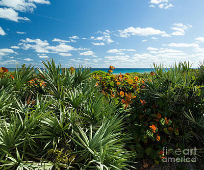 Saw Palmetto Photograph - Sea Grapes And Saw Palmetto by Michelle Wiarda