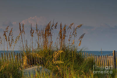 Photograph - Sea Grass Sunrise by Gene Berkenbile