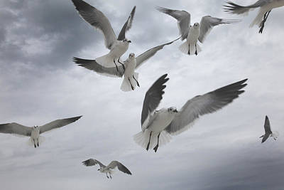 Photograph - Sea Gull Aggression by Joseph G Holland