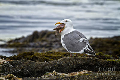 Photograph - Sea Gull And Starfish by Carrie Cranwill