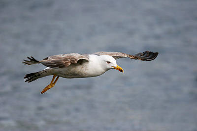 Balance In Life Photograph - Sea Gull by Charlie Photographer