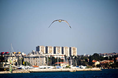 Photograph - Sea Gull Flying Near Zadar by Brch Photography