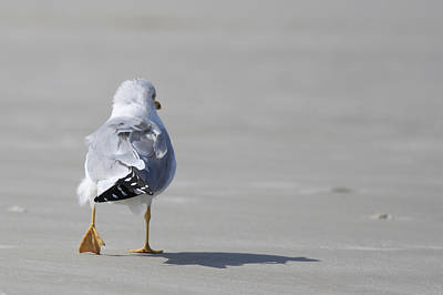 Walking Away Photograph - Sea Gull by Kitty Ellis