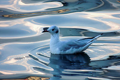 Photograph - Sea Gull On Lake Lucerne by Marilyn Burton