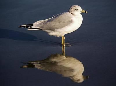 Sea Gull Reflection Art Print by Paulette Thomas