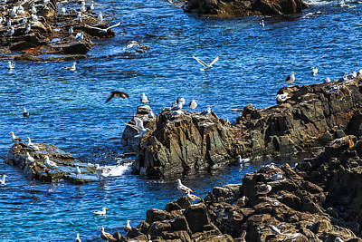 Photograph - Sea Gulls 1 by Perla Copernik