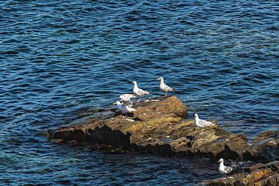 Photograph - Sea Gulls 2 by Perla Copernik