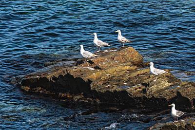 Photograph - Sea Gulls 3 by Perla Copernik
