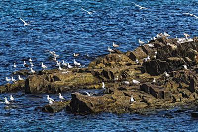 Photograph - Sea Gulls 4 by Perla Copernik