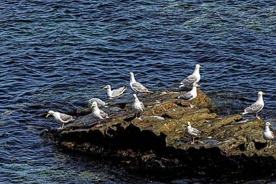 Photograph - Sea Gulls 5 by Perla Copernik