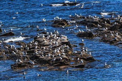 Photograph - Sea Gulls 6 by Perla Copernik