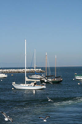 Photograph - Sea Gulls And Sail Boats by Joseph Coulombe