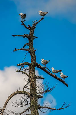 Peaceful Scene Photograph - Sea Gulls Hangin Out by Paul Freidlund