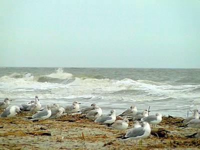 Sea Gulls In Windy Surf Art Print by Cindy Croal