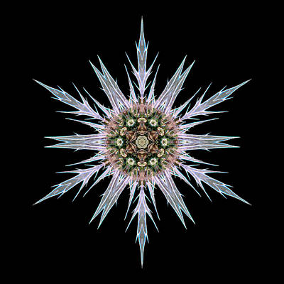 Photograph - Sea Holly I Flower Mandala by David J Bookbinder