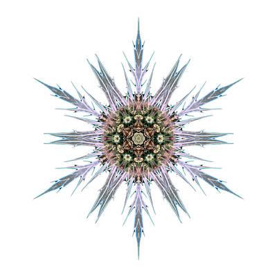 Photograph - Sea Holly I Flower Mandala White by David J Bookbinder
