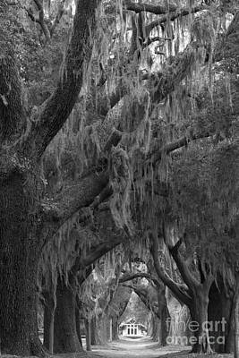 Photograph - Sea Island Oaks Black And White by Adam Jewell