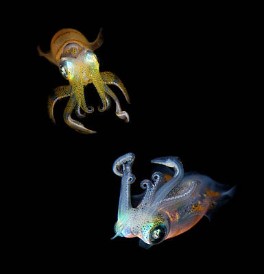 Squids Photograph - Sea Jewels by Andrey Narchuk