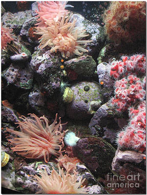 Art Print featuring the photograph Sea Life by Chris Anderson