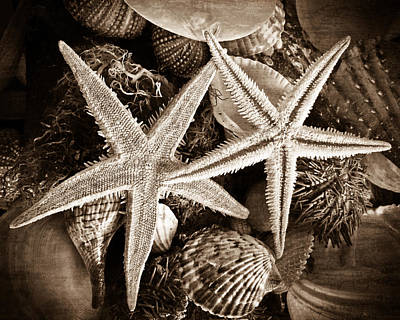 Photograph - Sea Life In Sepia by Colleen Kammerer