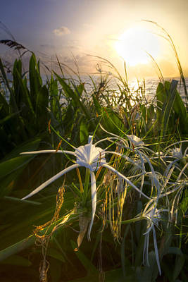 Sea Lily Print by Debra and Dave Vanderlaan