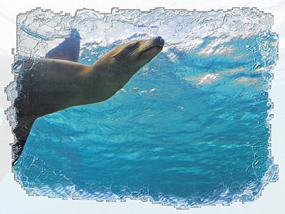 Photograph - Sea Lion 2b by Walter Herrit
