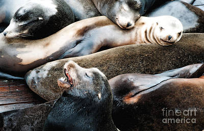Oregon State Photograph - Sea Lion Dreams by Gwyn Newcombe