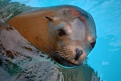 Rhoades Photograph - Sea Lion by Mg Blackstock