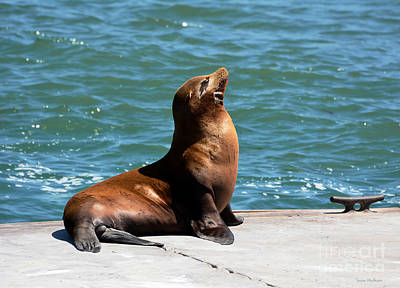 Sea Lion Posing On Boat Dock Art Print
