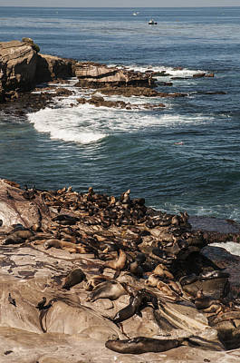 Photograph - Sea Lions At La Jolla Cove by Lee Kirchhevel