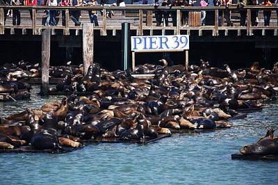 Photograph - Sea Lions At Pier 39 by Aidan Moran