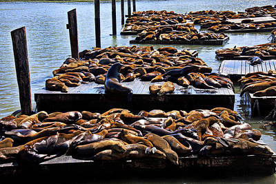 Sea Lions At Pier 39  Art Print