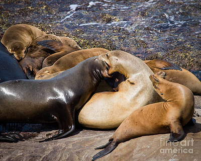 Photograph - Sea Lions At Work by Dale Nelson