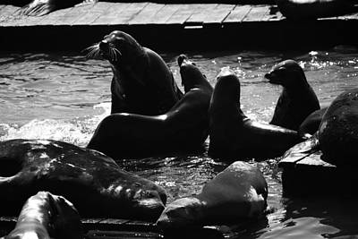 Photograph - Sea Lions In The Bay Area by Aidan Moran