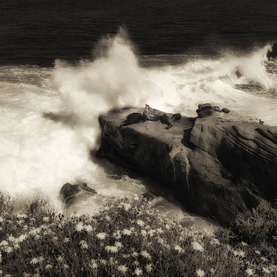 Photograph - Sea Lions La Jolla by Ron White