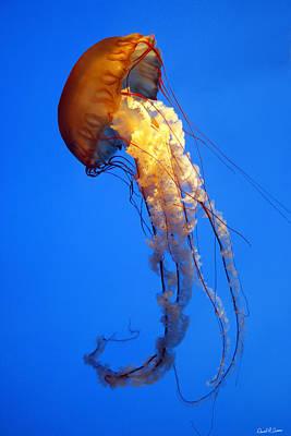 Sea Nettle Art Print by David Simons
