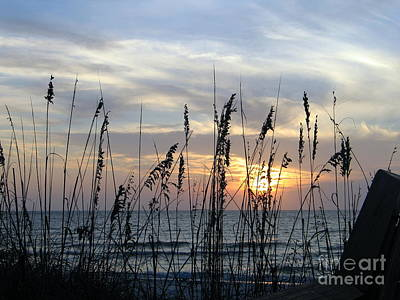 Art Print featuring the photograph Sea Oak Sunset by Shelia Kempf