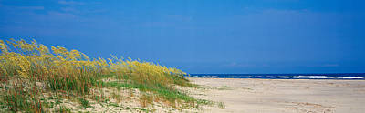 Sea Oat Grass On The Beach, Charleston Art Print