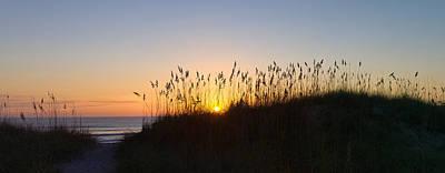 Sea Oat Grass On The Coast, Florida, Usa Art Print