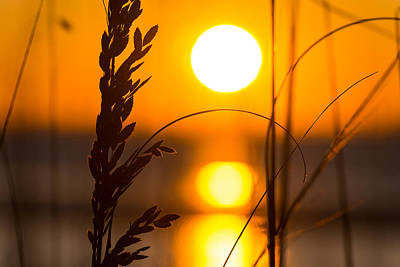 Photograph - Sea Oat Sunrise by Clint Buhler