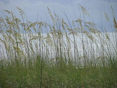 Photograph - Sea Oats And Shimmering Sea by Ellen Meakin
