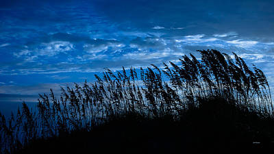 Photograph - Sea Oats At Dawn by John Pagliuca