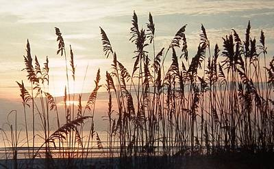 Photograph - Spectacular Sea Oats At Sunrise by Belinda Lee