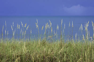 Sea Oats By The Blue Ocean And Sky Art Print by Karen Stephenson