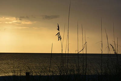 Photograph - Sea Oats - Captiva Island Florida by John Black