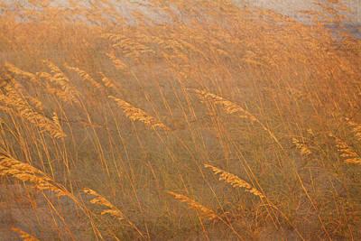 Photograph - Sea Oats by Dale  Gurvis