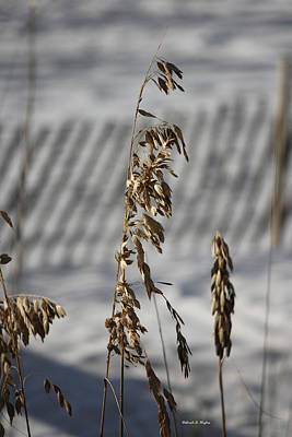 Photograph - Sea Oats by Deborah Hughes