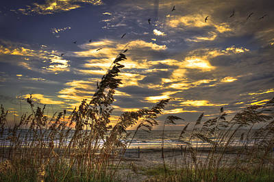 Photograph - Sunrise Sea Oats Pelicans Dune Fences On Tybee Island Georgia by Reid Callaway