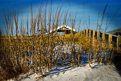 Photograph - Sea Oats by George Taylor